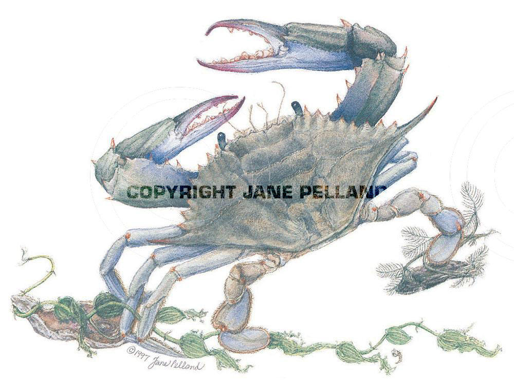 Lithographs, cards, gift enclosures and bookmarks by Jane Pelland ...